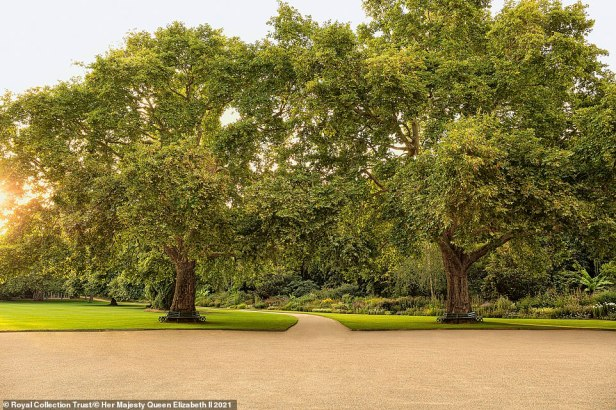The bookalso reveals that the Queen receives a seasonal posy, made from the garden's blooms, every Monday when she is in residence. Pictured: The garden's two most famous plane trees are known as Victoria and Albert. They are named after Queen Victoria and her beloved consort. The couple planted the trees more than 150 years ago