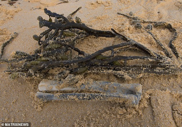 Two bones that were found washed up on Tura Beach near Merimbula on Saturday night have been confirmed to come from an animal and aren't Melissa Caddicks (pictured)