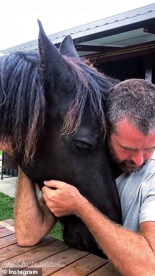 Strange behavior: Evans hugged the horse's head and asked,