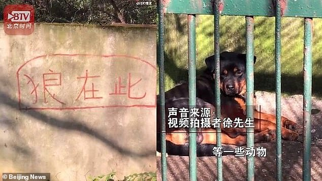 Speaking to Beijing News Mr Xu said that he had been told by keepers at the zoo that there had been a wolf living in the cage but it had 'died of old age'