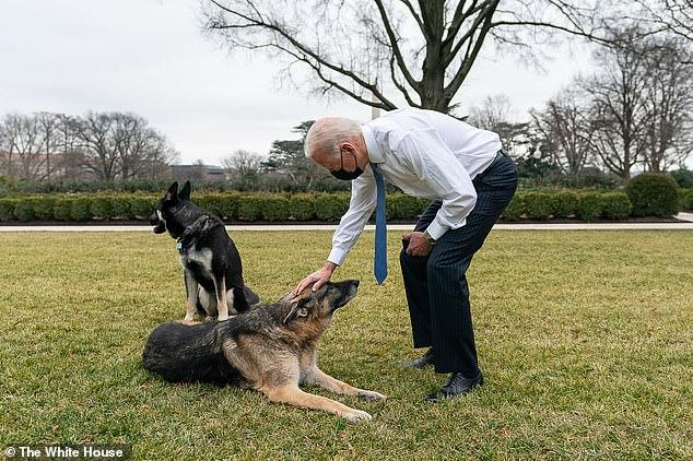 President Biden pats Champ in the Rose Garden as Major looks on