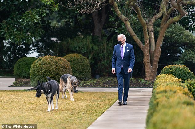 President Joe Biden walks with his dogs Major and Champ in the Rose Garden of the White House in January