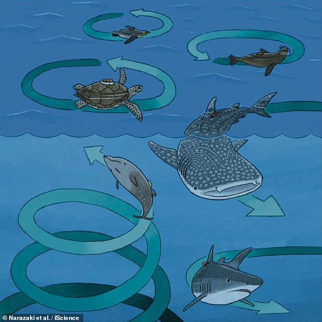 This artist's impression shows the circling behaviour of various large marine creatures