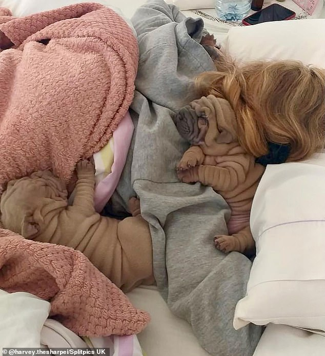 Miss Arguimbau with two Shar Pei puppies asleep in bed