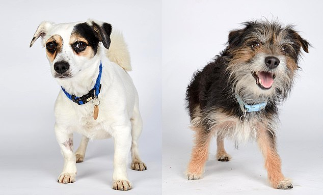 The pets looking for homes on Channel 4's The Dog House mostly have children's names