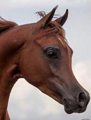 Distressing: Horses ¿prettified¿ with slim noses and huge eyes