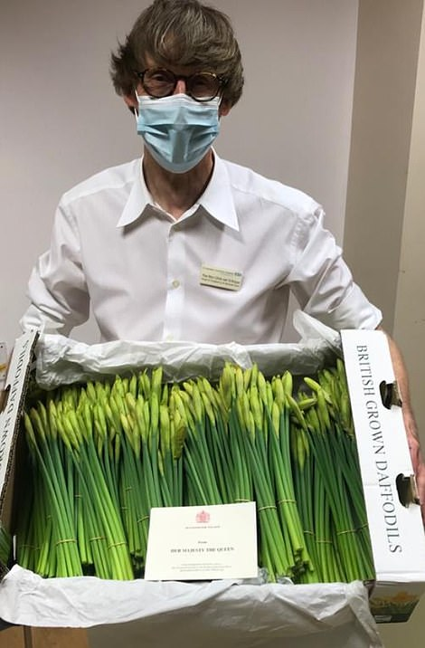 Last night, the Queen sent box of daffodils on behalf of herself and the Royal Household, to St George's Hospital in Tooting, London. The annual gift is sent by the Queen to NHS hospitals as a thank you to staff and to cheer up patients
