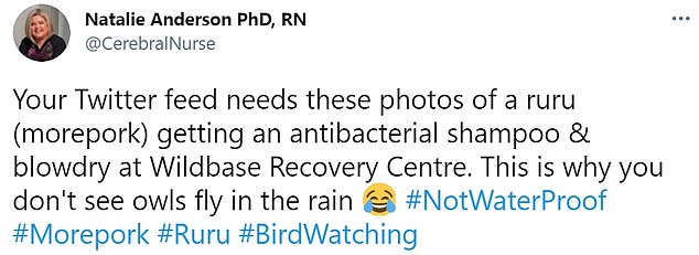 Dr Natalie Anderson shared the picture explaining that birds didn't fly in the rain, because they'd all look like the Ruru