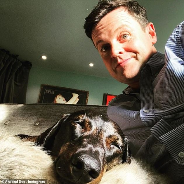 Grateful: Declan Donnelly, 45, took to Instagram in January to praise the vet for savinghis beloved dachshund Rocky's life after he was savaged by a fox