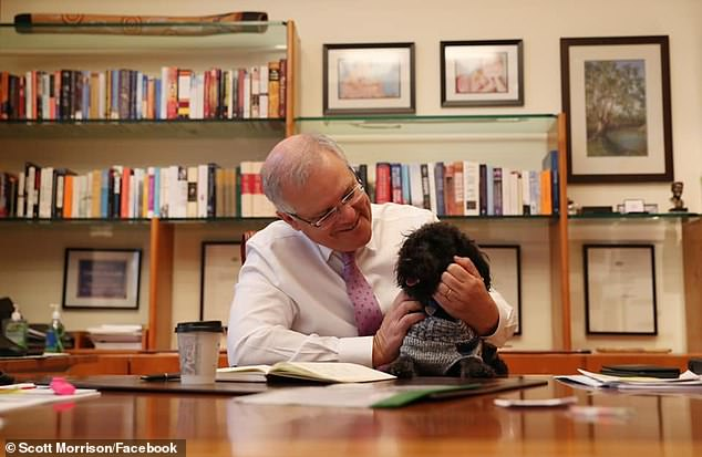 The Prime Minister's beloved pooch Buddy has been upsetting the neighbours at Kirribilli House. He's pictured with his owner at his parliamentary office Canberra