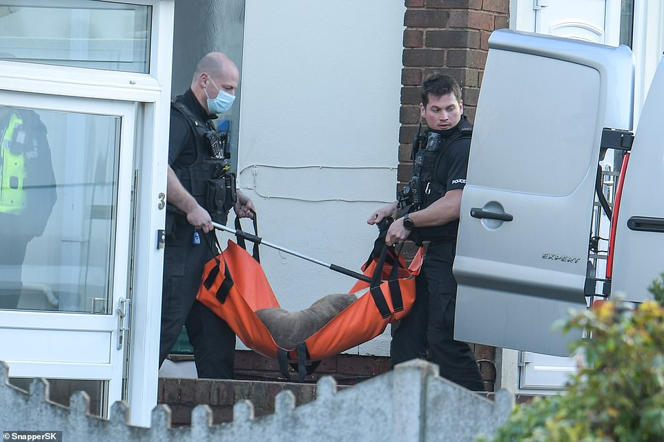 Pictured: Two officers carry one of the tranquillised dogs in an orange bag towards an open van outside