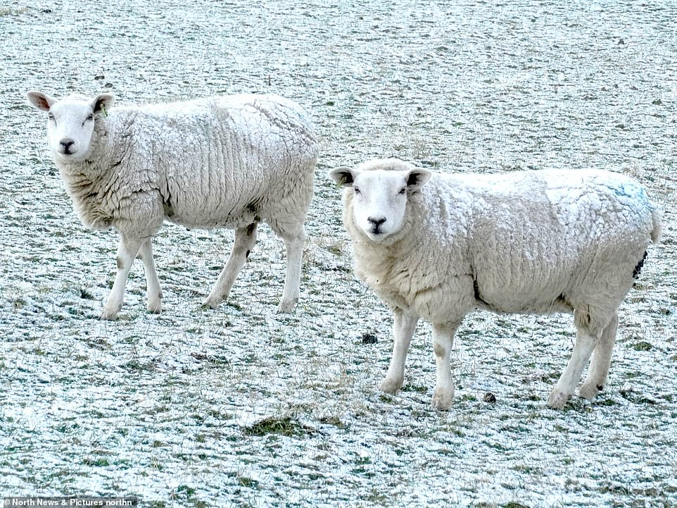 COUNTY DURHAM: Sheep stand on snow covered ground in Stanley, County Durham on Easter Monday following overnight snow as the UK enters an 'Arctic trough'