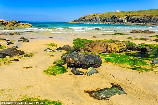 But some marine experts say it is not unusual for seals to wash ashore headless. Pictured: A sandy beach in Cornwall