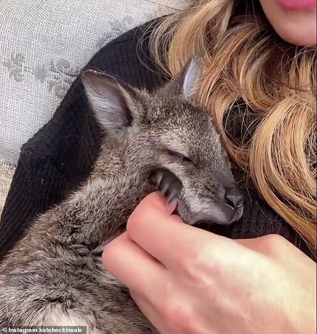 Cosy:In another, Kate is seen cuddling up to a grey wallaby on the couch