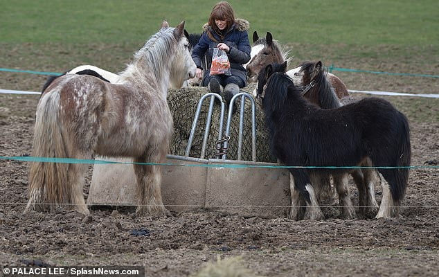 Lunch time: Summer caught the attention of multiple horses as she tempted them with chunks of carrot from a bag