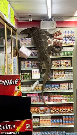 Staff and customers hid behind the counter as the beast rampaged through the store