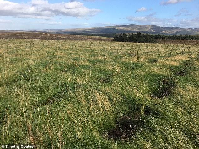 El primer 'bosque de Oxbury' se está plantando cerca de Peebles, en las fronteras escocesas.
