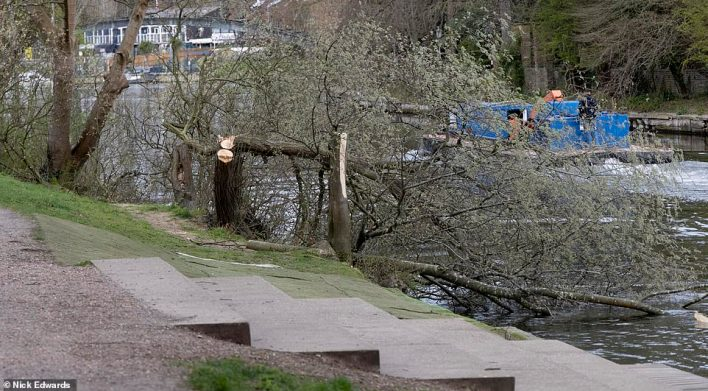 The phantom lumberjack has caused carnage with a series of attacks on a picturesque stretch of land near the Thames