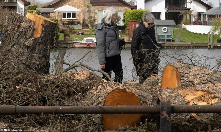 Two frustrated locals look at the devastation caused by the phantom lumberjack on the riverbank in a leafy part of Surrey