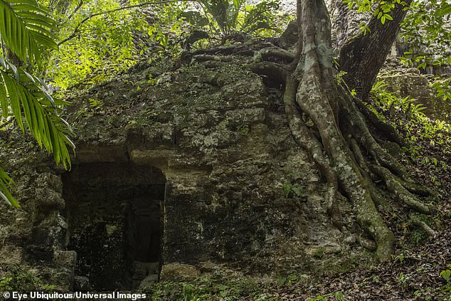 Rainforest trees have obscured much of the Mayan city of Tikal, which peaked between AD 200 and 900