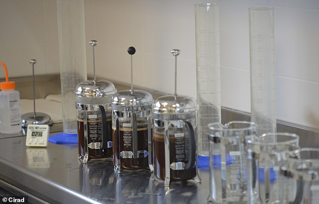 The brewed beverage ready for tasting at the CIRAD sensory analysis laboratory in Montpellier, France