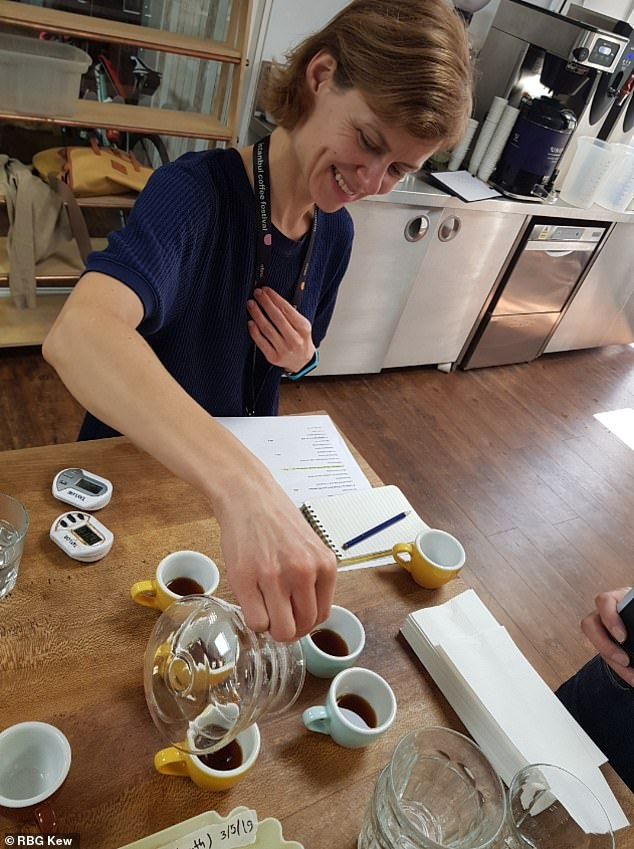 Tasting Stenophylla at Union Coffee in London.Based on protocol of the Specialty Coffee Association, the panel awarded the coffee 80.25 out of 100 ¿ defined as a 'speciality score'