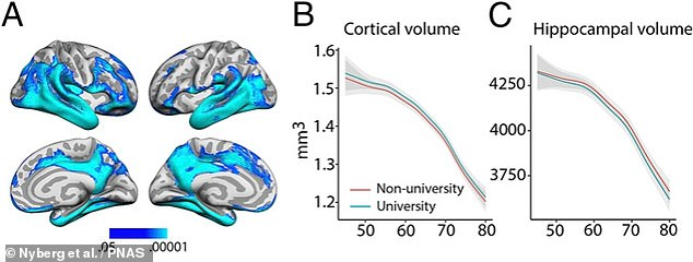 As with previous studies, the team found evidence of age-related declines in the volumes of certain portions of the cortex as well as the hippocampus, the region which plays a key role in learning and memory (left)However, the experts found no indication that that pace of this shrinkage (middle, for the cortex, and right, for the hippocampus) was significantly slower in those subjects who had gone through higher education