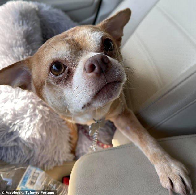 The foster owner said the animal was best-suited to live with a single woman, a mother-daughter duo or a lesbian couple