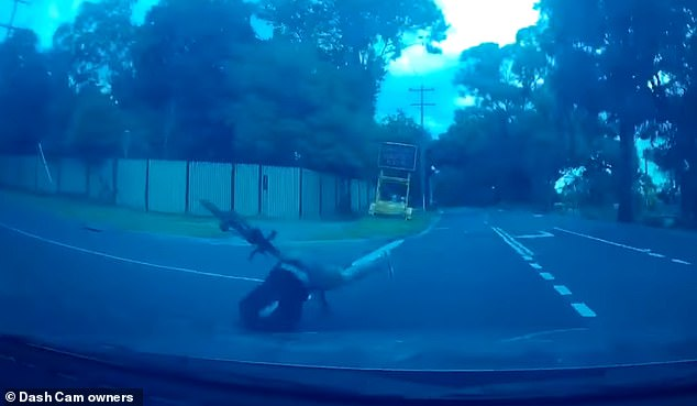 The driver was forced to slam on his brakes after the cyclist (pictured falling off his bike) lost control while flying around the corner