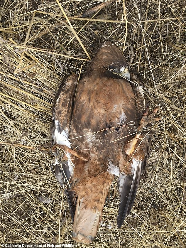The dead birds found on Parker's property were in various stages of decomposition