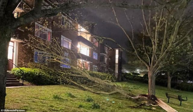 In Whitehawk, Brighton, a tree was blown down, narrowly missing the front of a block of flats