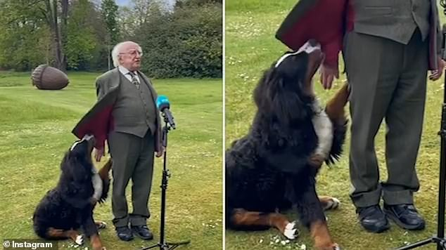 One of President Michael D. Higgins' beloved dogs has commanded attention in a new behind-the-scenes video shared online (pictured)