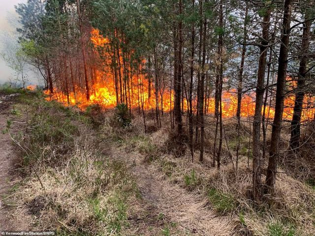 Yesterday more than 150 firefighters in Dorset battled two heath fires - which were being fanned by strong winds