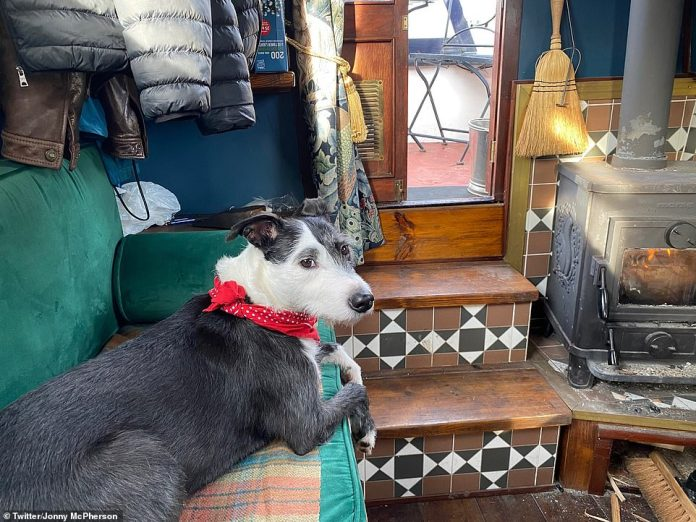 Sweet: Her lurcher rescue collie accompanies her on the boat and often appears in her photos as she snuggles up on blankets on the sofa and in her bed