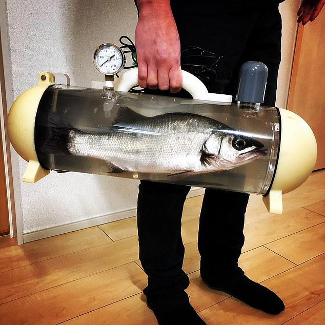 The tank comes in a long tube shape with a handle at the top like a bag and a gauge to monitor the saturation of the water