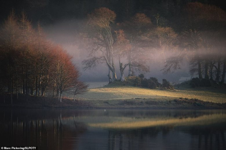 Marc Pickering scooped the top accolade in the landscape category with this serene scene. It shows the first light breaking through a low-lying mist over Loch Erdeline in Argyll. He said the light 'created a beautiful scene as it illuminated the frosty ground'