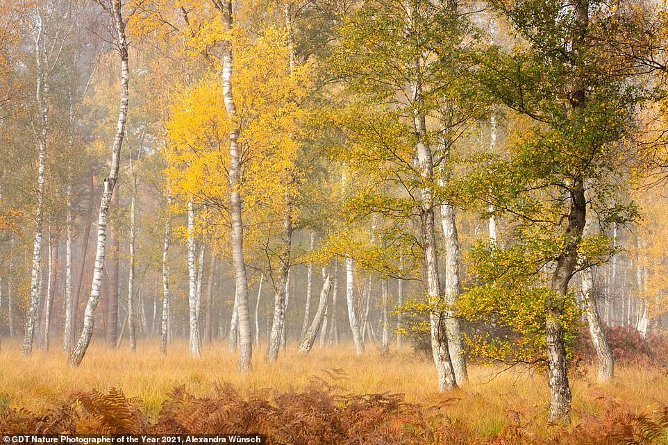 This beautiful shot of a golden-hued forest, titled Autumn Is Coming, came third in the Landscapes category. It was taken byAlexandra Wunsch from Germany