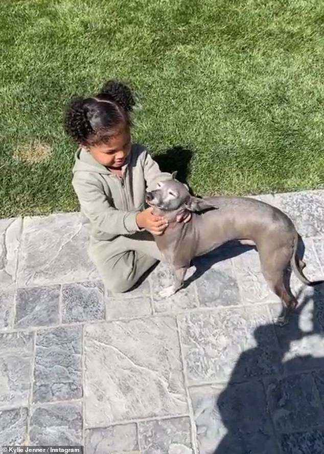 Her favourite: While playing with her pooches, she praised her pup Norman for being the only 'calm one' among her pets