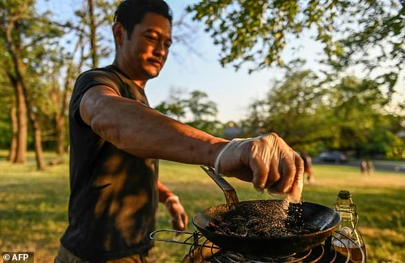 Chef Bun Lai seasons cicadas with salt as he fries them at Fort Totten Park in Washington
