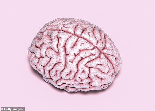 The human brain is the most complex and unique organ in the body, but a new study has identified another with similar traits – the male testicle. A team of scientists found men's brains and testes have a number of cellular and molecular similarities