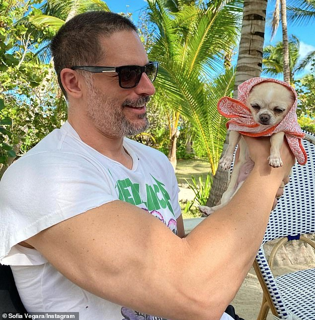Picked her favourite:The Modern Family actress, 48, joked that the Chihuahua has 'stolen everything that was hers', after moving into the LA pad she shares with her actor beau, 44