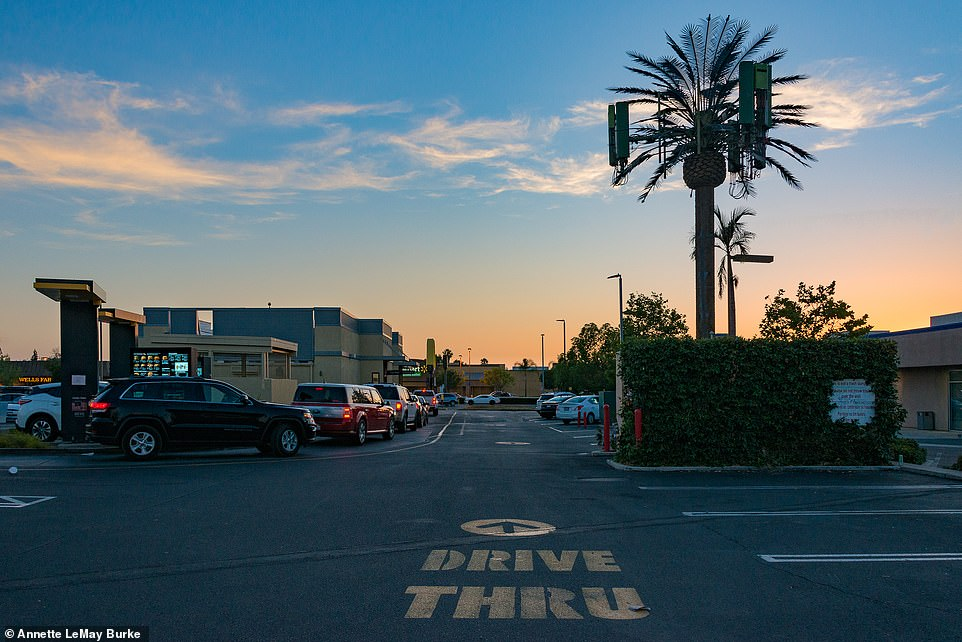 A phone mast with a palm tree aesthetic located in a drive-thru in La Mesa, California