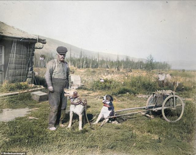 A man posed with his dog-drawn cart in rural Alaska in 1916. A summer day in Alaska can last as long as 20 hours which provide for colossal size vegetables, a record cabbage at the 2012 Alaska State Fair weighed 138 pounds