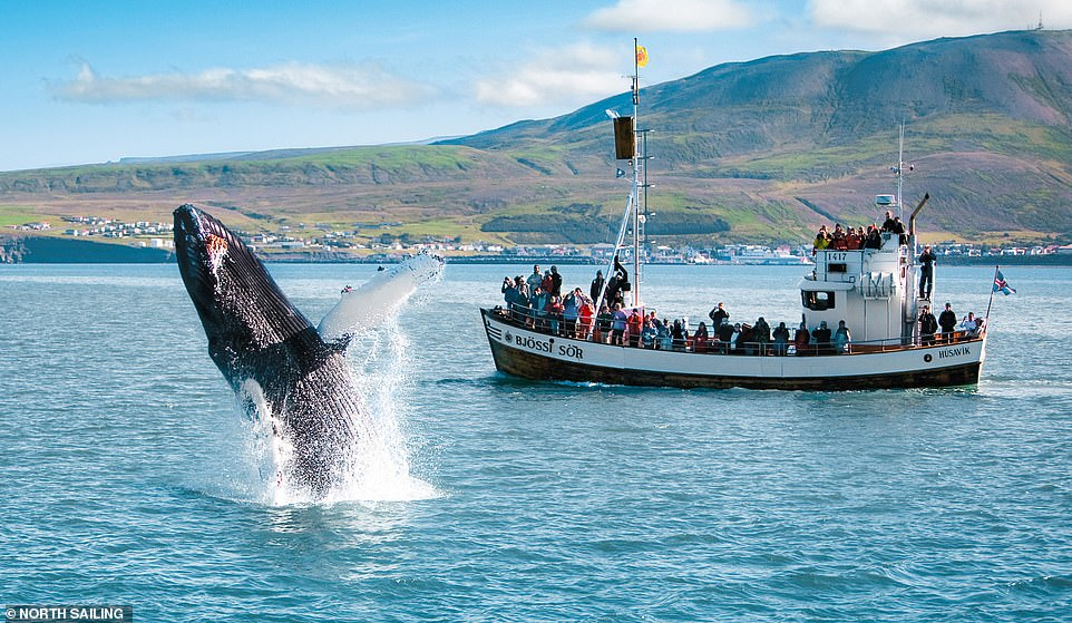 At the harbour in Husavik, you can hop on a boat and venture on a whale watching tour
