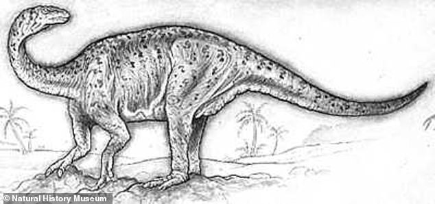 Excavators said they believed the fossil was atype of giant Lufengosaurus, a dinosaur from the Early Jurassic period