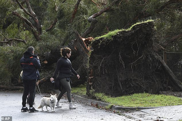 Residents look at a downed tree following storm damage in Lilydale, Melbourne