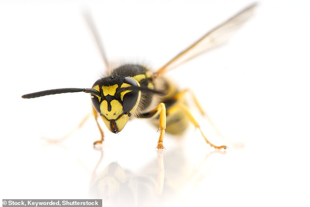 June and July are when wasp nests are at their busiest and the little predators emerge with but one goal in mind: to sting me