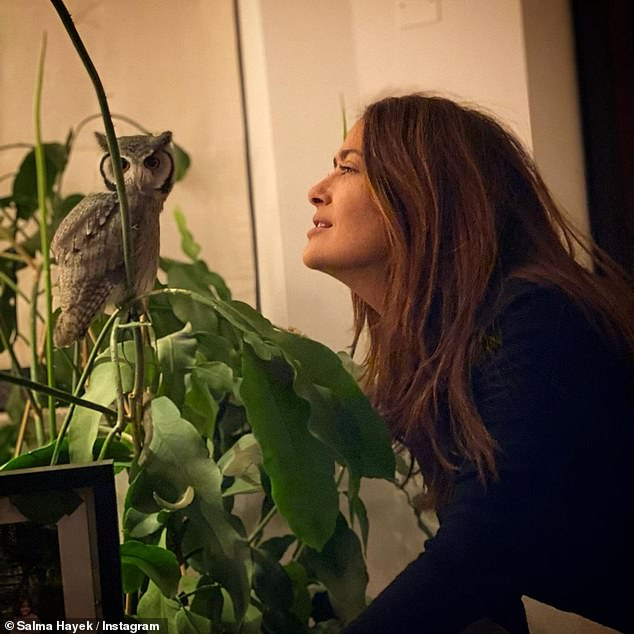 Unique: Salma Hayek revealed she finds peace by finding time to meditate with her beloved Southern white-faced owl named Kering, who she rescued just two years ago