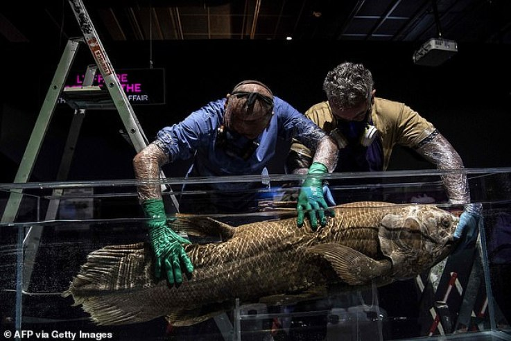 Centurion: The coelacanth ¿ a mysterious fish which can reach the size of a human ¿ grows at a very slow pace and can live for 100 years, French scientists have found in a new study