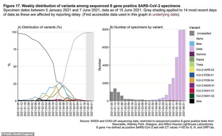 Graph left: A Public Health England report published today revealed the fast-spreading variant has now completely taken over in Britain and it makes up 99 per cent of cases. Graph right: Lab testing shows that the Delta variant (pink) has accounted for thousands of cases (specimens) in recent weeks and case numbers are soaring. It has dwarfed all other variants, shown in different colours, and pushed out the Kent strain, which is marked as unclassified because lab tests did not confirm the variant beyond doubt. A quirk of the Kent variant means that a basic check of whether a test has worked properly can rule it out - swabs where one of the virus's genes, known as the 'S gene' is not detected are assumed to be Alpha